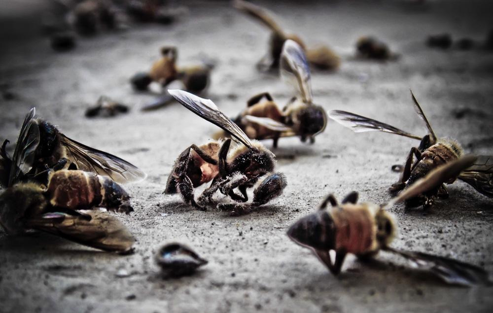 Kalifornien: Passant filmt, wie leblose Bienen zwischen zwei 5G-Antennen auf den Boden klatschen!