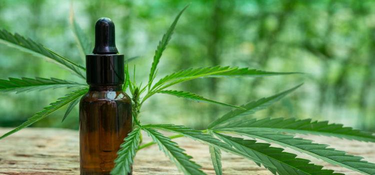 Cannabis Gegen Alzheimer