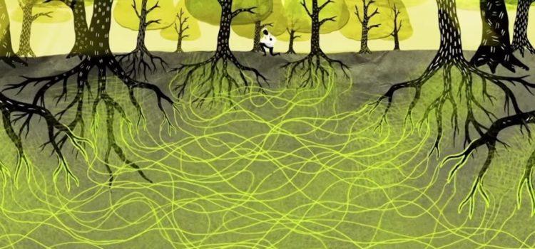 Slikovni rezultat za Bäume haben Gefühle: Sie haben Freunde und kümmern sich umeinander, wie ein altes Ehepaar